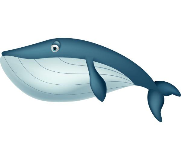 cute whale cartoon