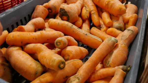 organic carrots on the market place