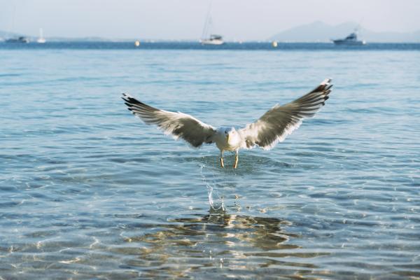 flying seagull landing near seafront