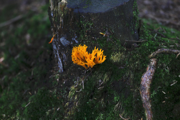 close up of orange flower growing