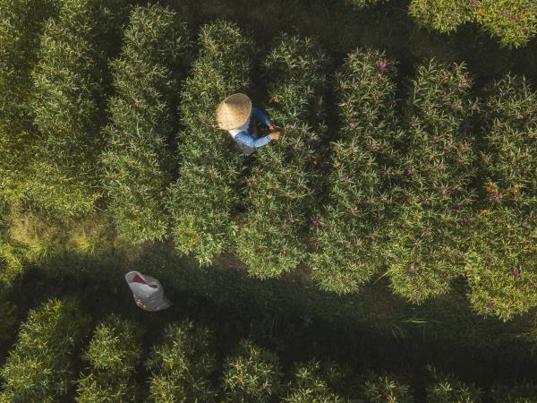 indonesia bali aerial view of farmer