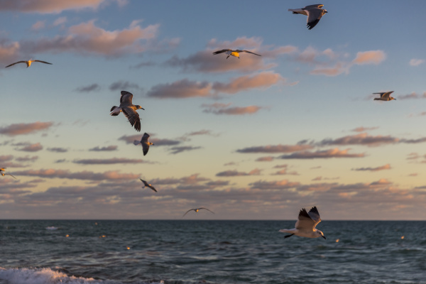 seagulls flying over sea at miami
