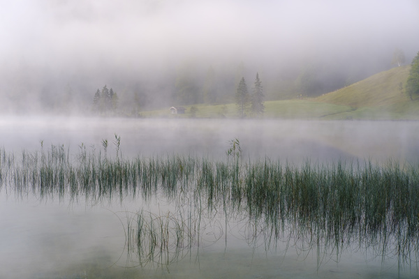 germany bavaria mittenwald reeds growing on