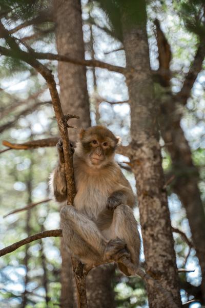 portrait of monkey perching on a