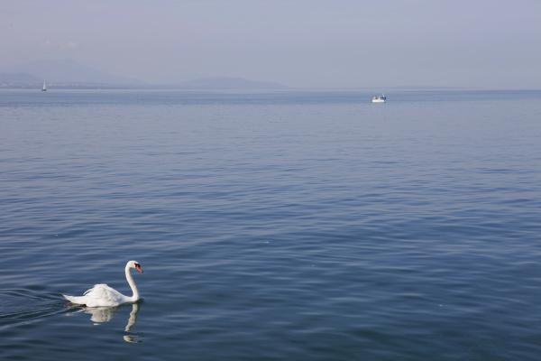 lausanne swan