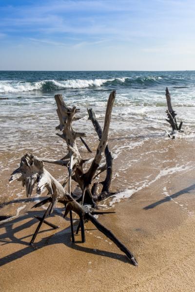 sri lanka southern province tangalle driftwood