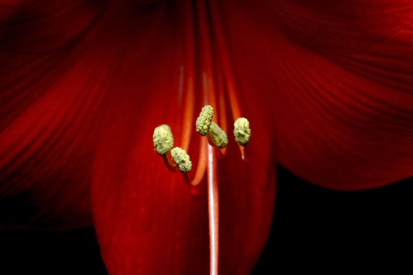 germany close up of stamens