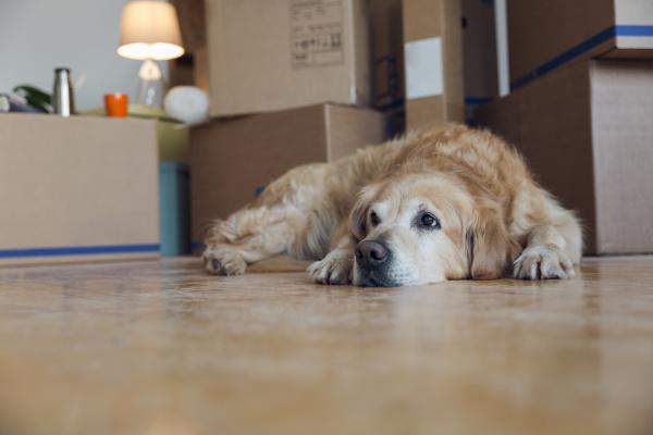 dog lying on the floor in