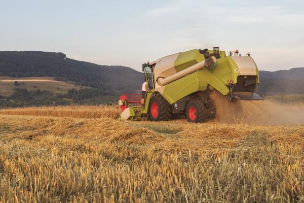 organic farming wheat field harvest combine