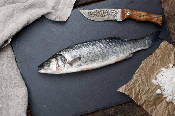 fresh whole sea bass fish on