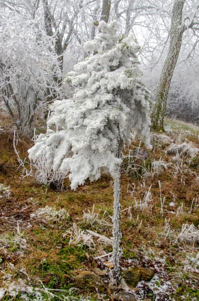 romantic winter landscape in january