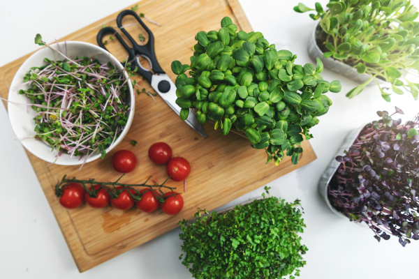 preparing fresh salad from microgreens and