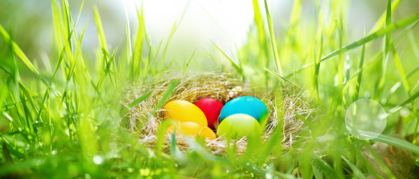 easter eggs in a meadow