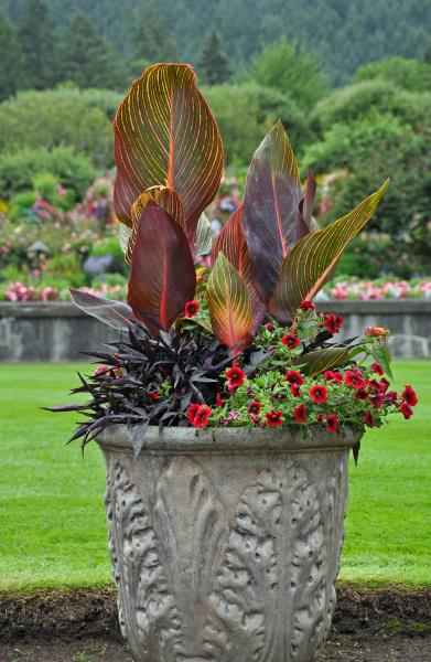 decorative petunia planter