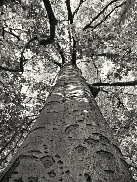 tree from below