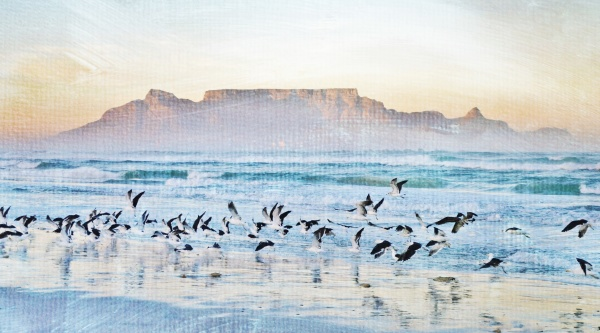 landscape with seagulls on the beach
