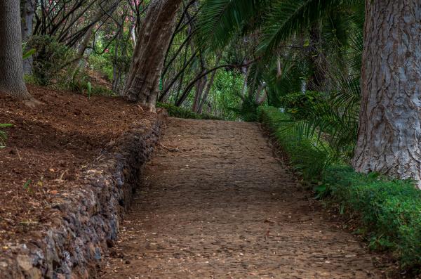 footpath in the botanical garden