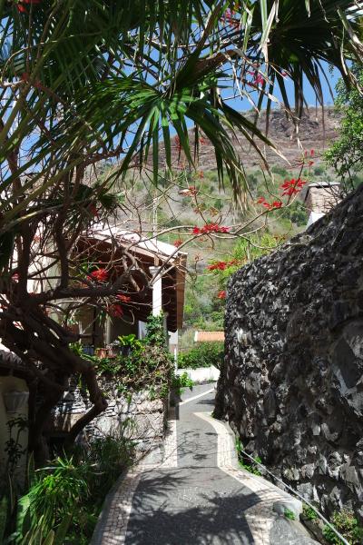 village alley in madeira jardim do