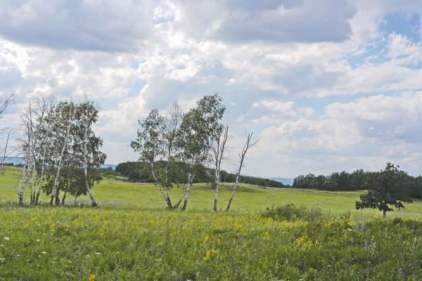 beautiful, summer, landscape - 28237813