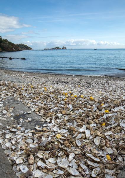 thousands, of, empty, shells, of, eaten - 28237902