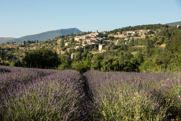 a, lavender, field, with, the, village - 28238567