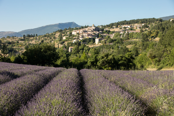 a, lavender, field, with, the, village - 28238630