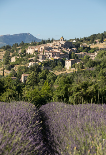 a, lavender, field, with, the, village - 28238727