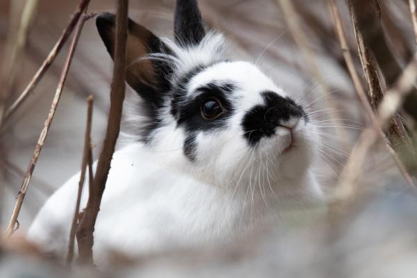 a, wild, rabbit - 28238846