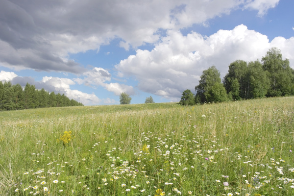 beautiful, summer, landscape - 28238092