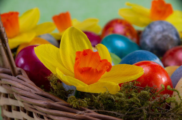 easter, , colored, painted, eggs, in - 28238087