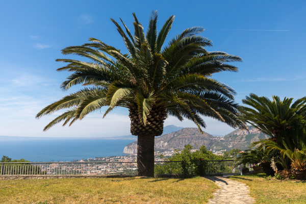 palm, tree, with, the, gulf, of - 28238051