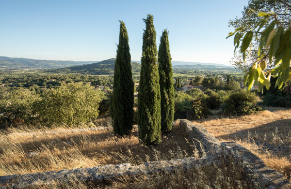 three, cypresses, in, , in, saint - 28238545