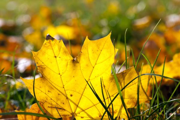 autumn, foliage - 28239502