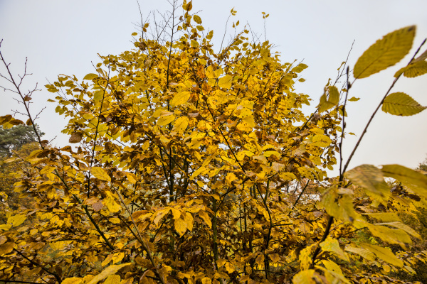 multicolored, beautiful, foliage - 28239655