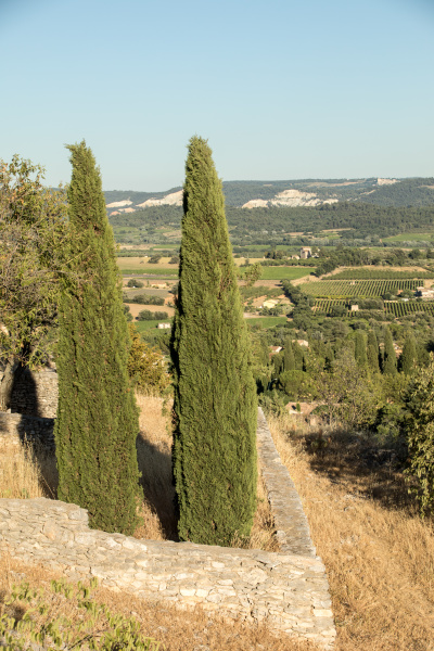 panoramic, view, of, cultivated, fields, , vineyards - 28239266