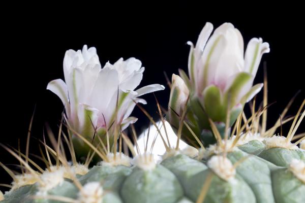plants, from, the, desert - 28239710