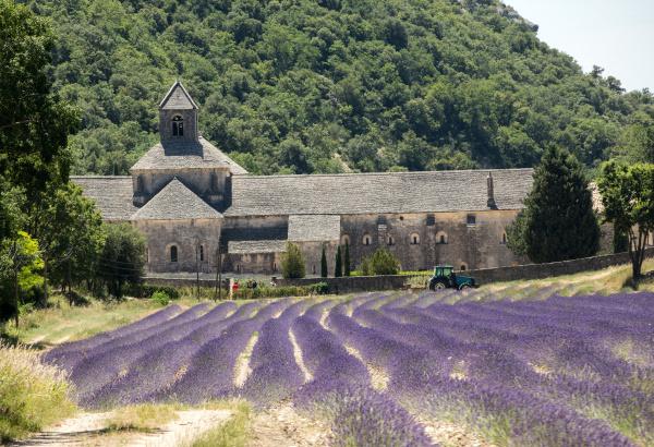 senanque, abbey, or, abbaye, notre-dame, de - 28239150