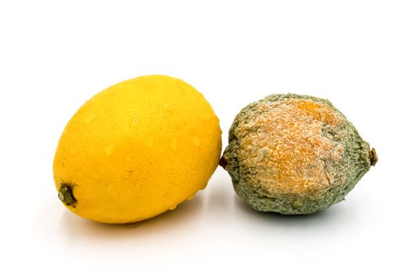 citrons pourris et frais isoles