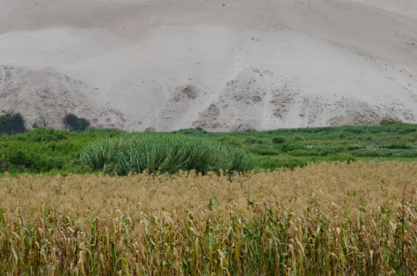 lluta, valley, in, the, arica, y - 28257721