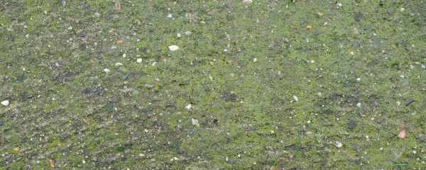 wide concrete texture with moss background