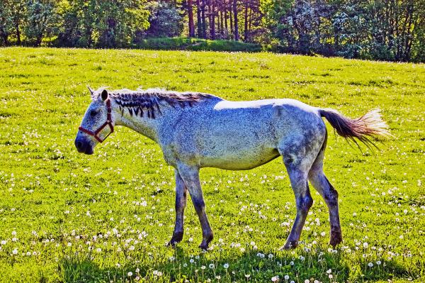 horse on field grazing