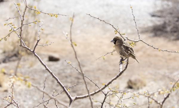 a photo of a sparrow