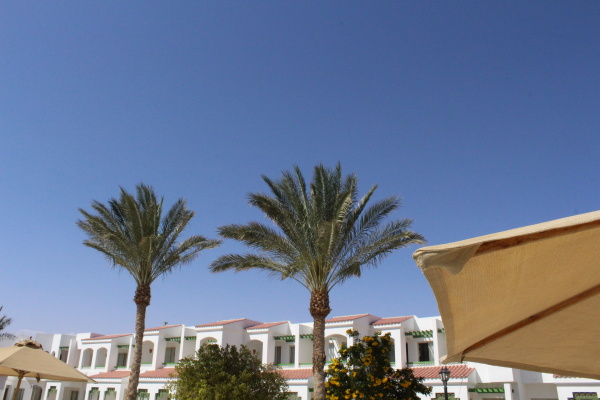 beauty in the hotel egypt