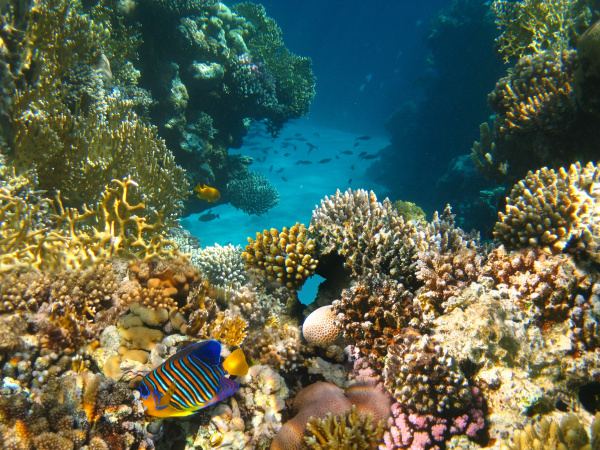 underwater, world., coral, fishes, of, red - 28353245