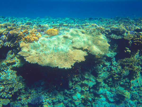 underwater, world., coral, fishes, of, red - 28353256