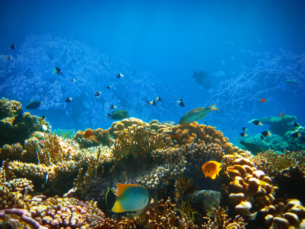 underwater, world., coral, fishes, of, red - 28353261