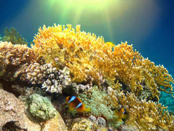 underwater, world., coral, fishes, of, red - 28353269