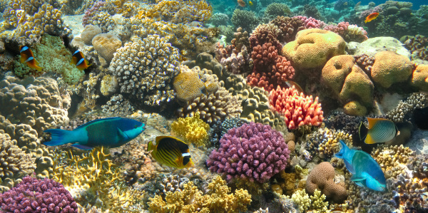 underwater, world., coral, fishes, of, red - 28354790