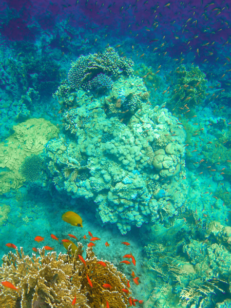 underwater, world., coral, fishes, of, red - 28354791