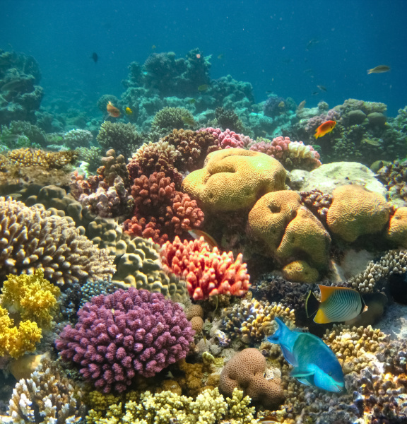 underwater, world., coral, fishes, of, red - 28354796